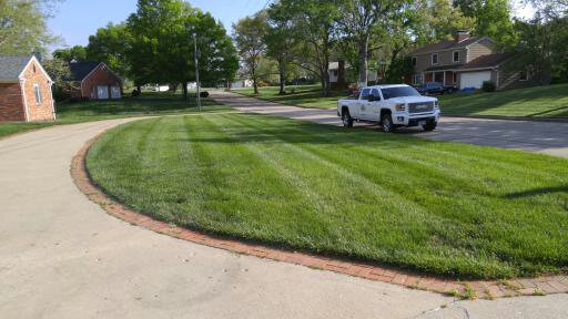 Great Lawns No Chemicals
